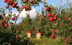 Canada - Organic food: un mercato in espansione